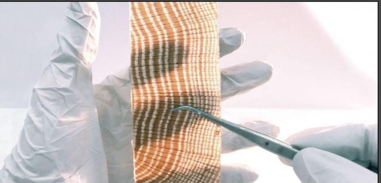 Le bois translucide: matériau du futur?